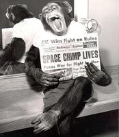 Space_chimp_lives