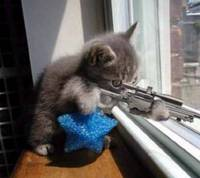 Sniper_cat